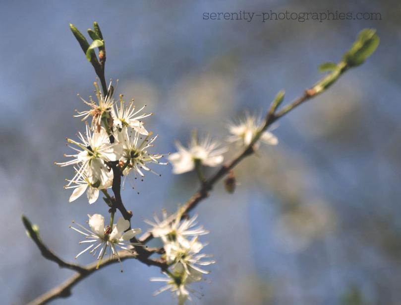 fleurs copie