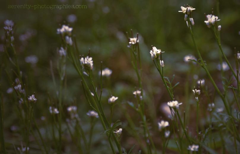 fleurs3 copie