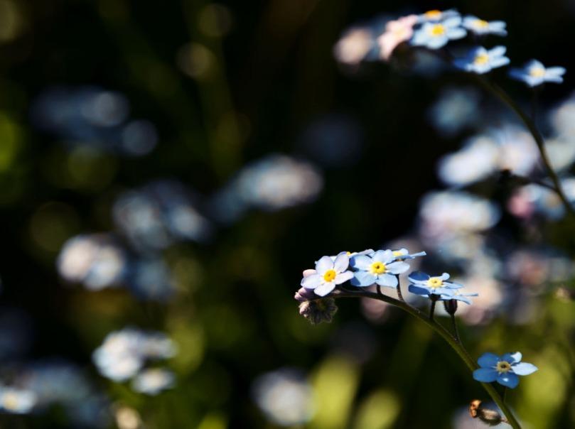 fleur copie