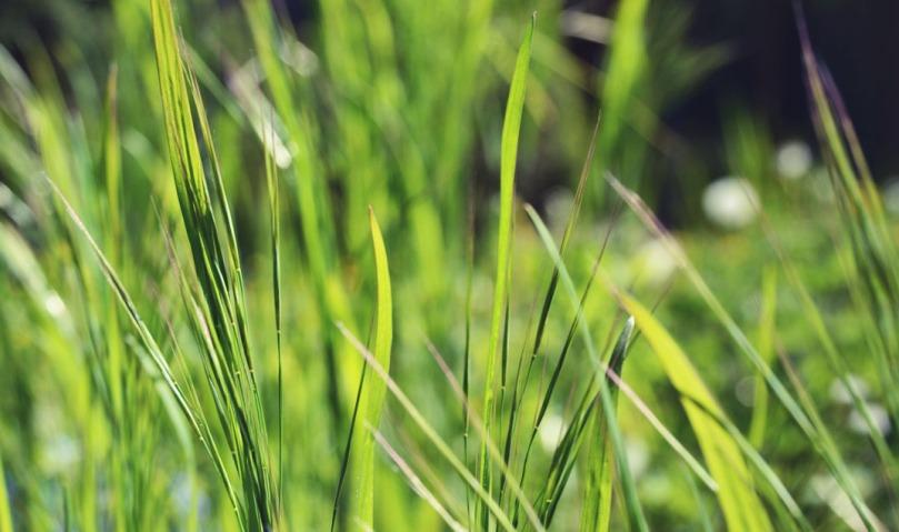 hautes herbes copie