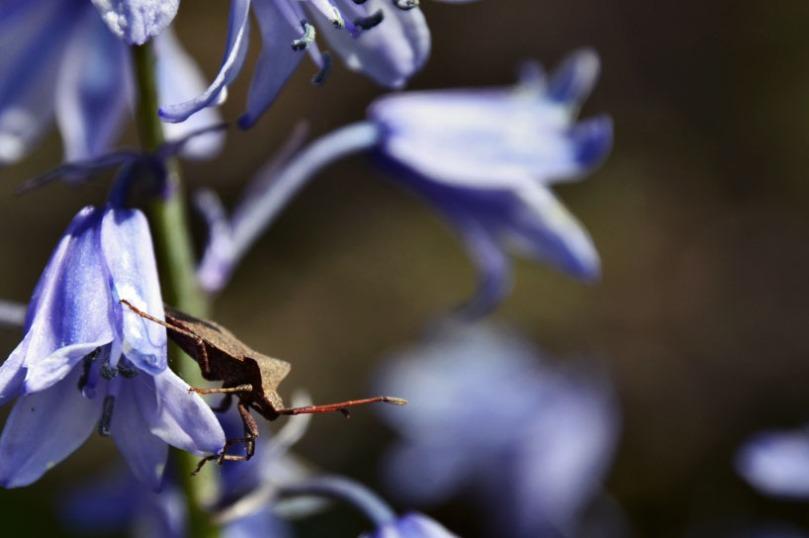 insecte copie