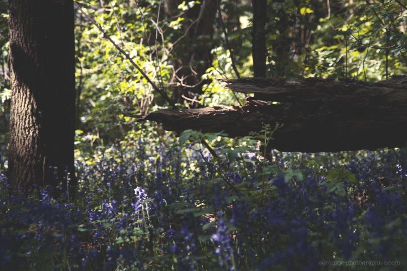 tronc d'arbre copie