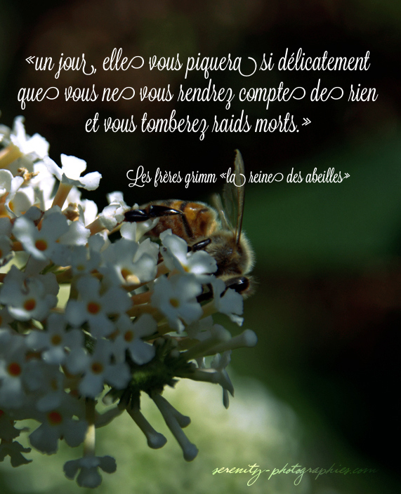 serenity-photographies - abeille pinterest