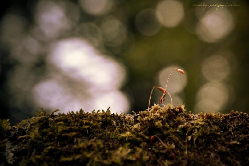 serenity'sphotographies-couleurs d'automne